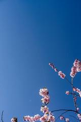 Fleeting moments pt 1 (Mattias Lindgren) Tags: nikon d600 sweden 50mm f18 fleeting moment cherry spring spiderweb 50mmf18 nikond600 fleetingmoment