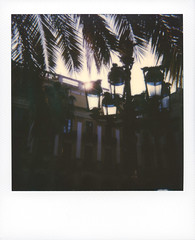 Placa Reial (Sophort) Tags: 2019 coloritype antonigaudi barcelona barrigotic barriofranklin catalunya gaudi gothicquarter onestep onestepplus palmtree placareial polaroid polaroidoriginals roidweek20191 socialmedia spain sun roidweek roidweeek2019 polaroidweek