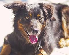Dog Bokeh | 21. April 2019 | Schmalensee - Schleswig-Holstein - Deutschland (torstenbehrens) Tags: dog bokeh | 21 april 2019 schmalensee schleswigholstein deutschland