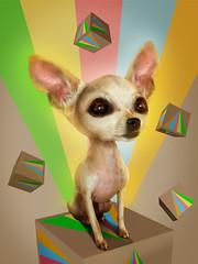 Gilda Toy (KIKO ALCAZAR PHOTO) Tags: digitalart popart art photo colour surrealista cover ilustración poster eye retrato yellow fashion blue pink kikoalcazar makeup dog perro