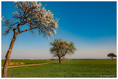 1,2,3 arbres ... (Pascale_seg) Tags: paysage countryscape landscape campagne champs countryside printemps spring primavera ciel sky blue bleu arbres trees alberi moselle lorraine grandest france nature earth terre