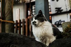 neko-neko2404 (kuro-gin) Tags: cat cats animal japan snap street straycat 猫