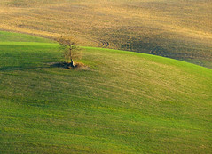 Alone in the meadow (Darea62) Tags: minimal outside tree hills nature valdorcia countryside fields solitary mood sonyalpha77 green colline winter