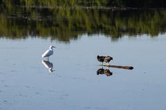 IMG_1328 (C.S. McDonald) Tags: florida orlandowetlandspark christmas unitedstatesofamerica