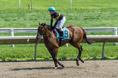 The Curt Fox (GB) (Pedroza, Brian) (avatarsound) Tags: boston suffolkdowns horse horseracing horses jockey jockeys race racetrack racing rider riding sport