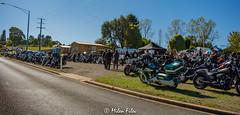 NIK_3201 (Mile's) Tags: erica victoria australia motorbike charity harley davidson bmwr1200gsa indian motorcycles triumph