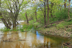 Riverine Forest (4) (Nicholas_T) Tags: pennsylvania columbiacounty southcentretownship columbiapark susquehannariver forest trees deciduous temperatedeciduousforest riparian palustrine palustrineforest spring nature creativecommons