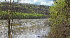 Riverine Forest (2) (Nicholas_T) Tags: pennsylvania columbiacounty southcentretownship columbiapark susquehannariver forest trees deciduous temperatedeciduousforest riparian palustrine palustrineforest spring nature creativecommons