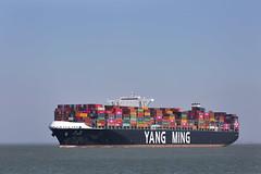 YM WISDOM (angelo vlassenrood) Tags: ship vessel nederland netherlands photo shoot shot photoshot picture westerschelde boot schip canon angelo walsoorden cargo container ymwisdom