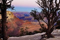 Grand Canyon, Arizona (klauslang99) Tags: klauslang nature naturalworld northamerica grand canyon arizona south rim landscape trees