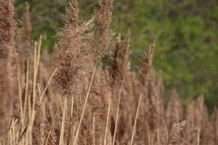 IMG_0399 (picolo_rasco@hotmail.com) Tags: nature fauna flora damme belgium