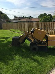 DE260073-C4EC-4259-B09C-1BFB15B61654 (Lakeview Stump Grinding) Tags: lakeview columbia strongsville stump grinding ohio station north royalton cleveland berea olmsted falls landscaping bay village northeast service grind removal