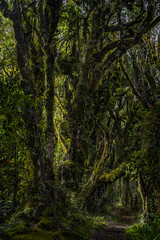 Märchenwelt • Fairy tale World (lidschlag60) Tags: neuseeland nordinsel taranaki urwald wald baum moos baummoss märchenhaft licht schatten newzealand northisland primevalforest fairytale virginforest forest wood light shadow landscape tree old ancient nature green outside