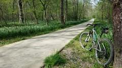 2019 Bike 180: Day 49 - Snowflakes (mcfeelion) Tags: cycling bike bike180 bicycle spring 2019bike180 cct springfieldva wildflower