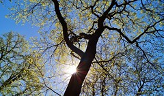 Greetings from Heaven (farmspeedracer) Tags: nature april 2019 avril sky sun tree ray shadow germany sunday sonntag light hope warmth easter