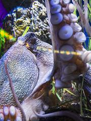 P4210103 (asferic) Tags: barcelona catalonia catalunya aquarium fauna sea