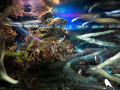 P4210008 (asferic) Tags: barcelona catalonia catalunya aquarium fauna sea