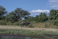 DSC_3762_1 (Marshen) Tags: zambia capebuffalo canoe