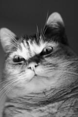 (edoardo.battistini87) Tags: monochrome black white cat cats light eyes