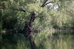 'De Mare' - Waasmunster - Belgium (roland_tempels) Tags: belgium waasmunster water tree supershot