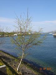 Greenock and Gourock (sisterphonetica) Tags: greenock gourock sunshine bankholiday easter heatwave coastal