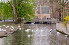 Minnewater in Bruges (gardenpower) Tags: swan minnewater bruges belgium park