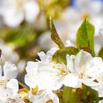 🎶 Honey for my Honee 🎶 thumbnail