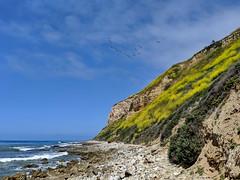 IMG_20190422_104741e (joeginder) Tags: jrglongbeach oceantrails pacific california beach rocky cliffs wildflowers hiking