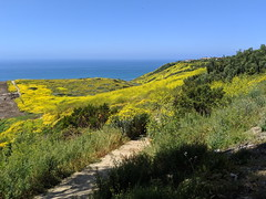 IMG_20190422_112235 (joeginder) Tags: jrglongbeach oceantrails pacific california beach rocky cliffs wildflowers hiking