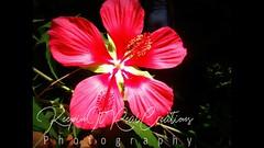 Fresh (keepinitrealcreations) Tags: flowers fresh arboretum raleigh nc photo photography nature outside freshair