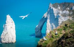 2019-04-22_07-51-43 (Lymatly Photos) Tags: bird sea falaise etretat goéland
