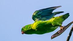 bird (sandilesmana28) Tags: sony a9 400 28 gm lens