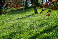 Spring Time (annepasquet) Tags: 2019 fr france fujifilm landscape maulevrier avril colors mer nature printemps spring
