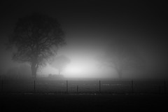Trees in the fog (lja_photo) Tags: light backlit silhouette silence silent dawn trees woodland copse fog foggy haze mist misty mysterious nature naturephotography naturepics outdoors black white blackandwhite bw bnw blackandwhitephoto monochrome monotone monoart moody mood morning minimalistic fineart fujixt20 woods exposure exploration outdoor ourluxembourg photography art abstract shadows dramatic landscape contrast natural noperson m