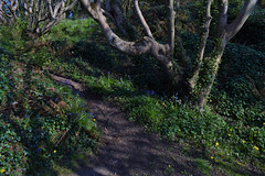 North Down Coastal Path west of Grey Point (John D McDonald) Tags: northdowncoastalpath northdowncoast coastalpath woodland trees greypoint nikon d3300 nikond3300 coast countydown codown down northdown northernireland ni ulster geotagged crawfordsburncountrypark helensbay holywood