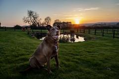 Sunset at Leyburn, North Yorkshire over Easter (christopher.czlapka) Tags: lodge sunhilllodges pond animals landscapes landscape love england uk yorkshire leyburn sunset photography photo flickr dogs dog button