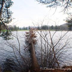 C77E2574-DCB8-4C70-8DFD-62A3AE5A83B6 (Hawkins1977) Tags: trees lake canon nature natureza spring april 2019 photography