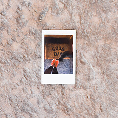22.100 (tara on the wander) Tags: image22100 tarainstapix redshoes instaxmini90 instantfilm cat fromwhereistand 100xthe2019edition 100x2019 roidweek polaroidweek