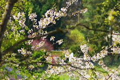 43 - Forbach en Avril 2019 (paspog) Tags: forbach forêt wald forest bois woods lorraine france printemps spring frühling avril april 2019 fleurs blumen flowers blossoms