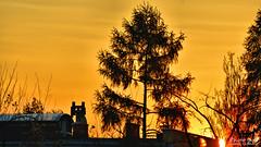 Sunrice mechanical cat (Szymon Karkowski) Tags: outdoor sunrice tree cat roof chimeny ventilation morning sun orange sky silesian voivodeship gliwice poland nikon d7100