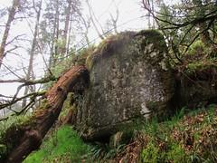 Brimpts Rocks Northern Wood Outcrop (end) SX 6725 7468 (Bridgemarker Tim) Tags: lesserknowntors dartmoor riverdart babeny