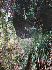 Brimpts Rocks Overhang in Northern Wood SX 6725 7468 (Bridgemarker Tim) Tags: lesserknowntors dartmoor riverdart babeny