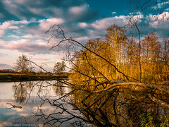 Fallen trees (Steppenwolf33) Tags: river water sunset tree lake steppenwolf33 sky clouds wernsdorf