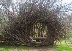 IMG_1432 (Pigeon Travels) Tags: 2019 arboretum california flowers garden nature santacruz trees ucsantacruzarboretum