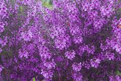 IMG_1392 (Pigeon Travels) Tags: 2019 arboretum california flowers garden nature santacruz trees ucsantacruzarboretum