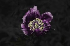 Magic flower ... (Julie Greg) Tags: flower nature nautre colours canon park garden details
