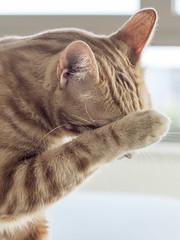 Time to bath (Papagueno) Tags: animals brian cat pet