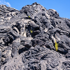 Lava and life (Rob McC) Tags: texture lava pahoehoe ferns hawaii volcanic contrast travel