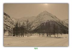 VALLEE DE LA MAURIENNE / BESSANS (régisa) Tags: bessans savoie maurienne vallée arbre tree neige snow skidefond skiable domaine montagne mountain