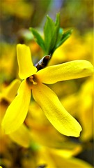 Spring vibes (Pyraa666) Tags: spring flowers sonyalpha58k macrophoto macro wiosna kwiaty makrofotografia outdoorsphoto